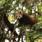 Neugierige Besucher sorgen für neugierige Blicke. Videostill: Red Pandazine