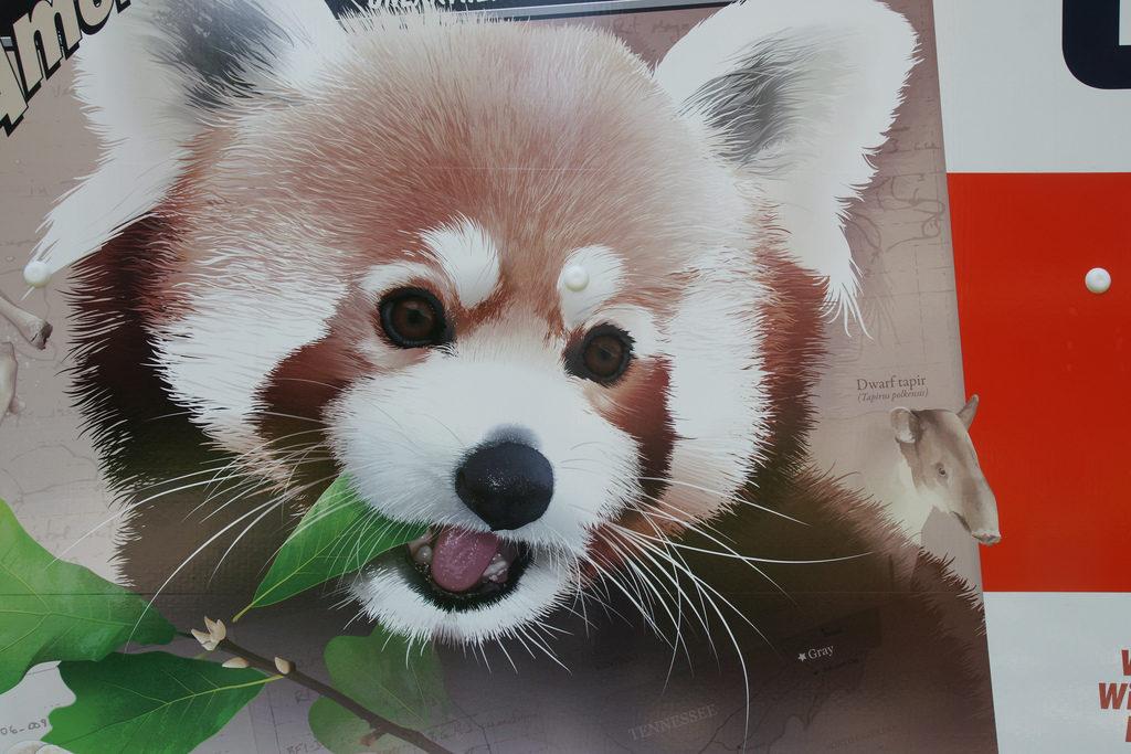 U-Haul Red Panda Gray Fossil Site