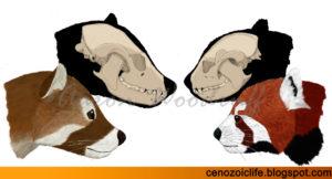 Schädel der Pandaarten