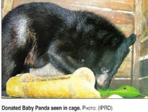 screenshot bear Myanmar