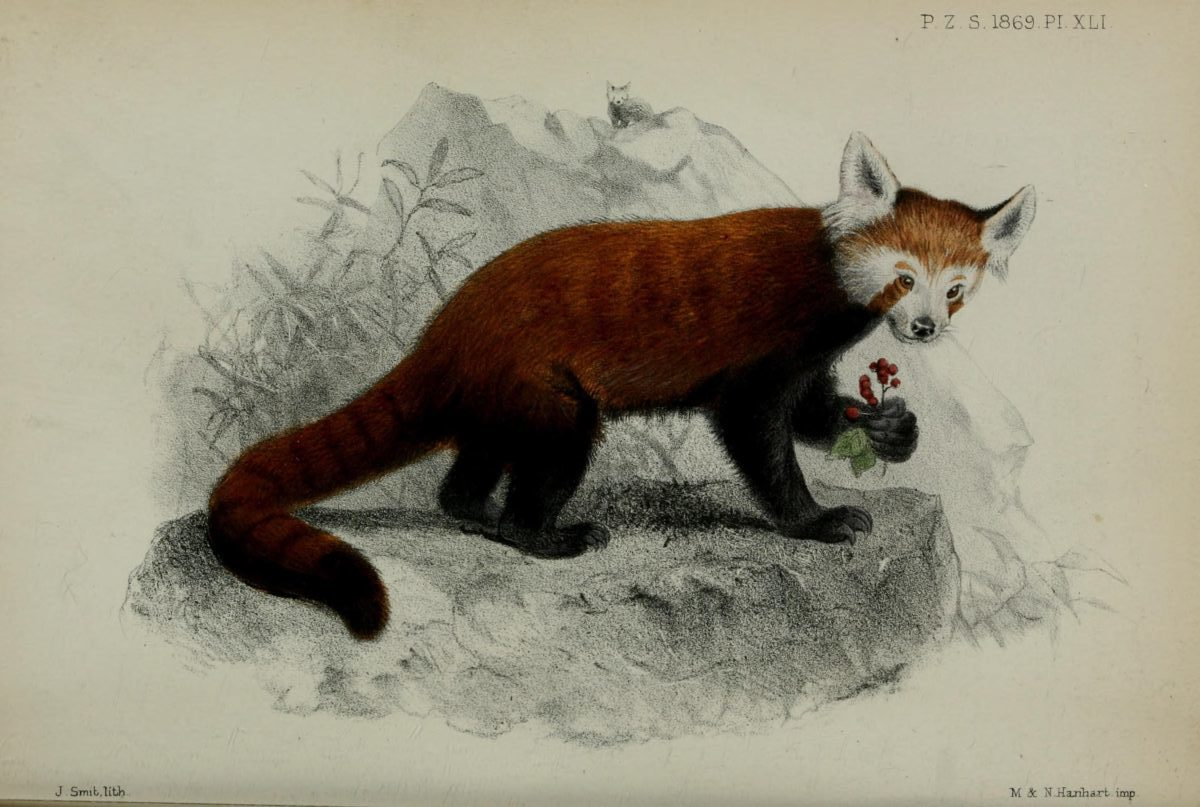 Proceedings-of-the-Zoological-Society-of-London