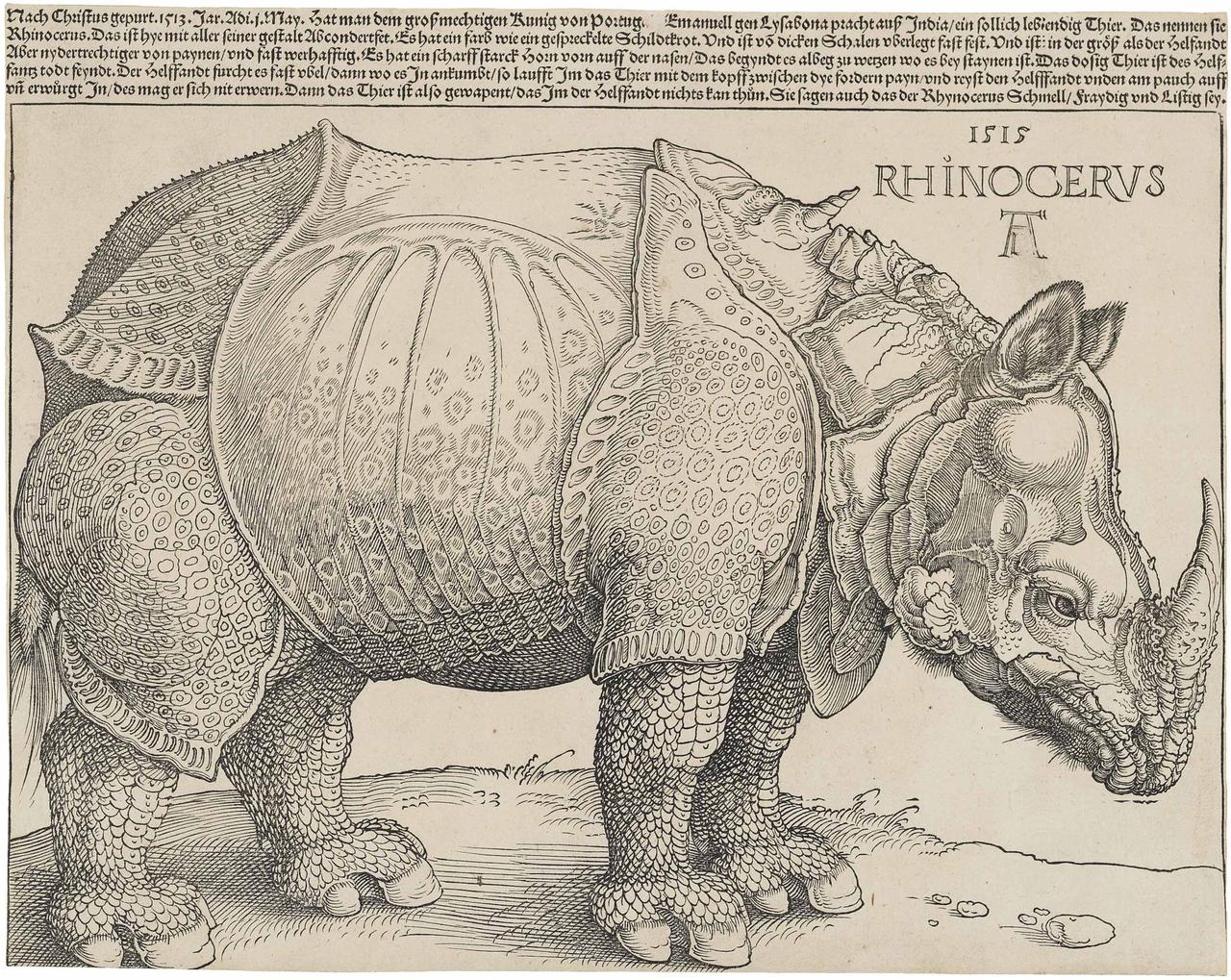 Rhinocerus von Albrecht Dürer