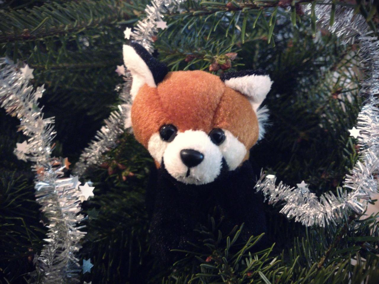 rote pandas weihnachten