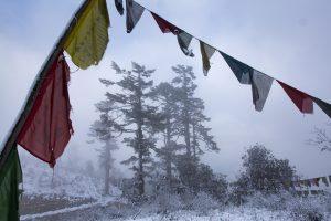 bhutan kleiner panda roter panda doku axel gebauer nepal himalaya das erste