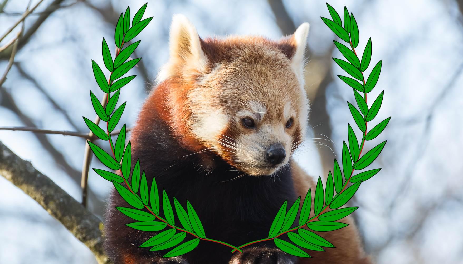 red panda filmfestival