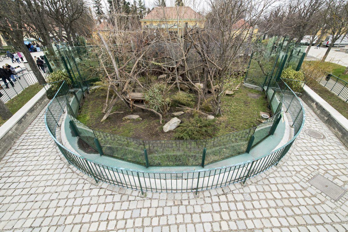 gehege rote pandas zoo vienna