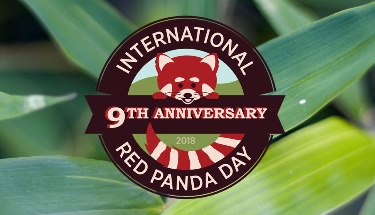international red panda day 2018