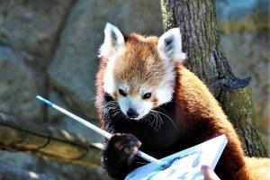 red panda art rosamond gifford zoo