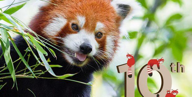 international red panda day 2019
