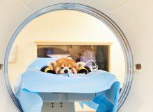 Roter Panda Polly erhält CT in der Helios Klinik