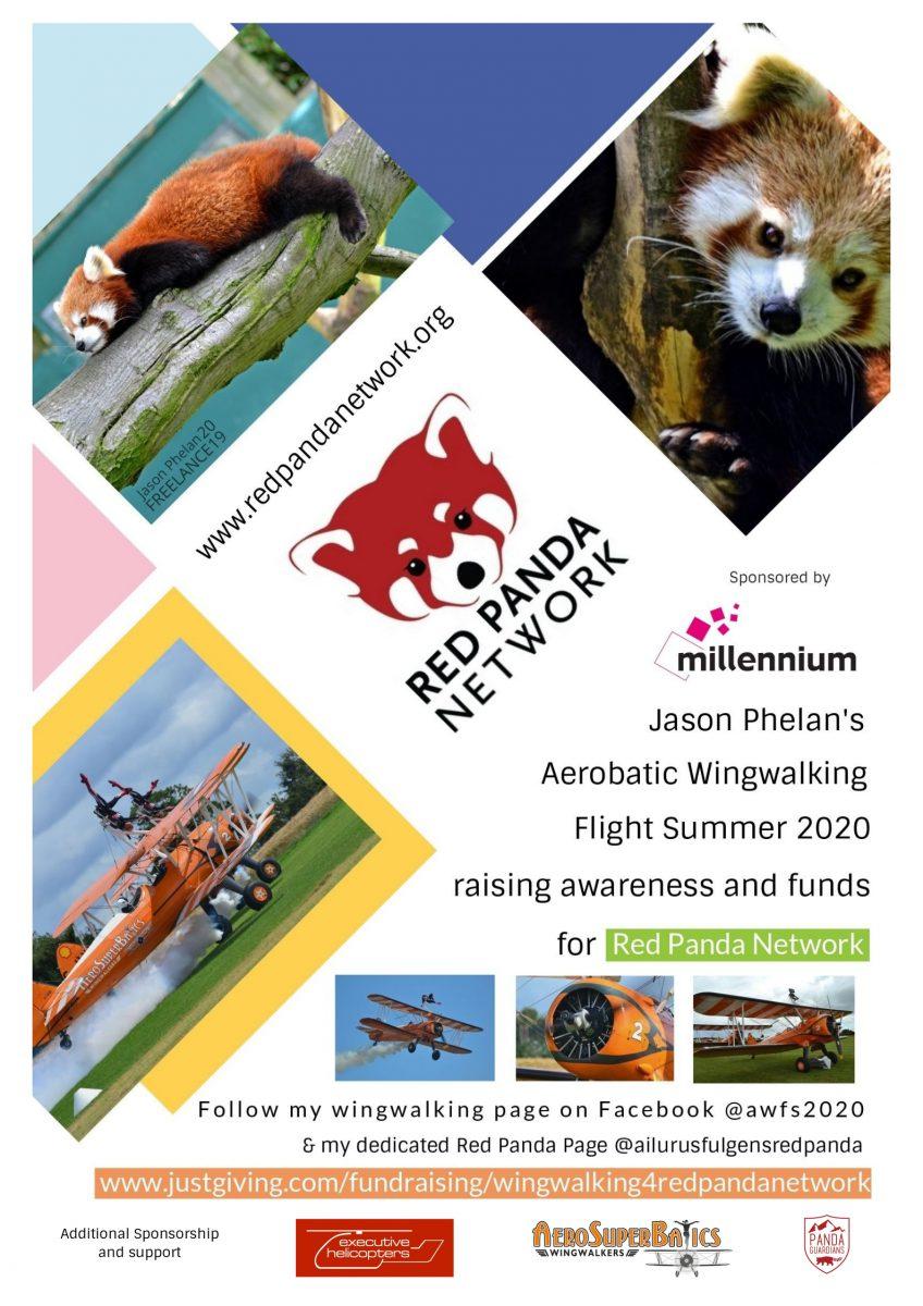 red panda wingwalk jason phelan red panda network