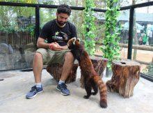 dr. mukesh thakur red panda dna database