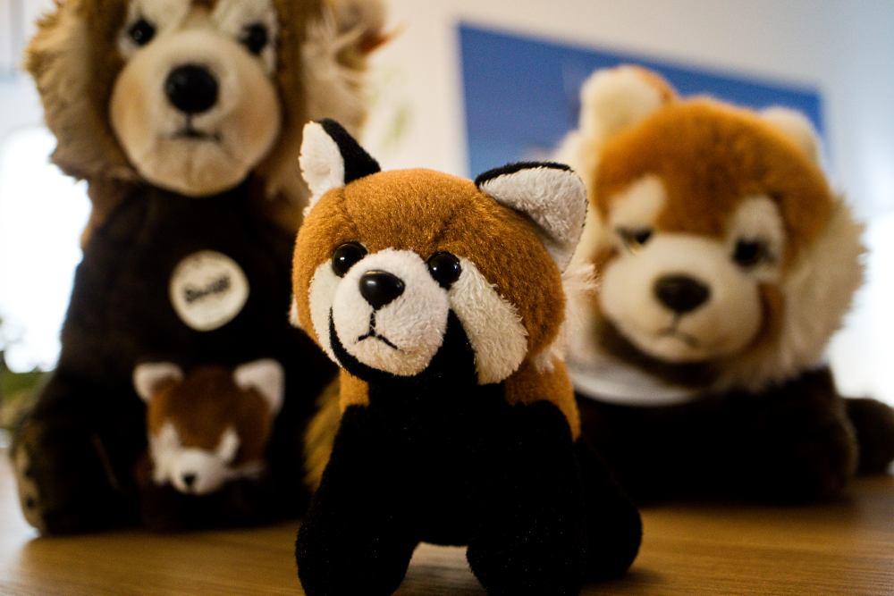 Roter Panda Plüschtier